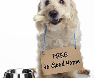 """Dangers of """"Free to a Good Home"""" Ads"""